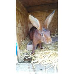 Mražený králík pro psy 1,9kg
